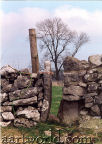 thin stile - the vernacular