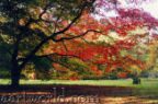 click to view photographs of Westonbirt Arboretum